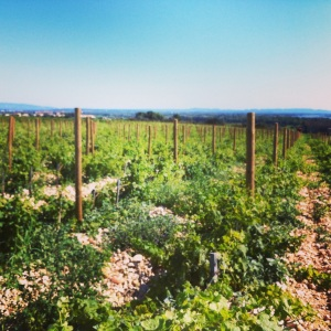 chc3a2teau-la-gardine-vignes-insta.jpg
