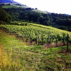 Pays_basque-vignes-2-Insta