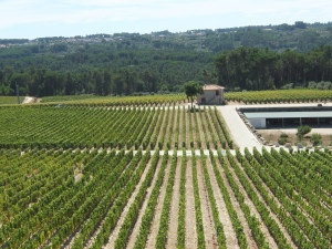 Portugal-vallee-dao-Quinta-de-lemos-3
