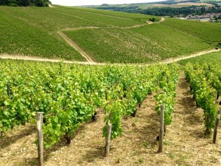 Chablis - Les Vignes 2