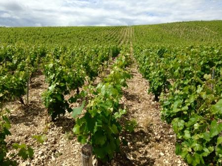 Chablis - Les Vignes