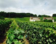 Hautvilliers - Vignes